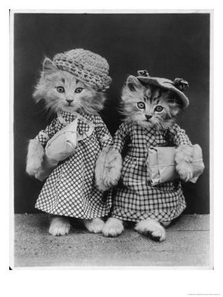 10145217~Living-Kittens-Dressed-up-and-Carrying-Parcels-Posters