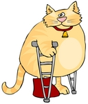 6298_chubby_orange_cat_walking_on_crutches_in_a_hospital_one_leg_in_a_cast