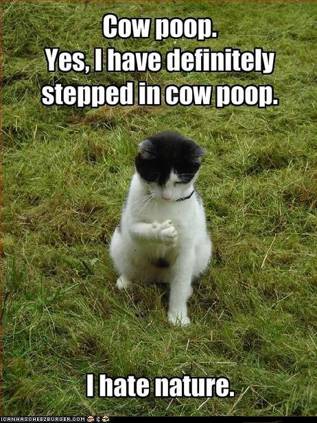 ew! Cow poop