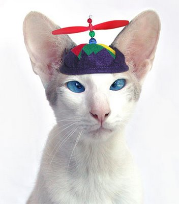 Propbeanie Cat