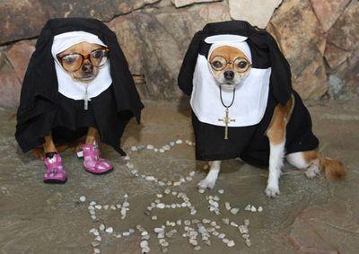 1031halloween-chiuahua-nuns
