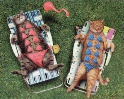 Cat Spa :-)