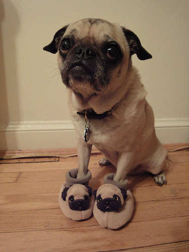 Nice slippers