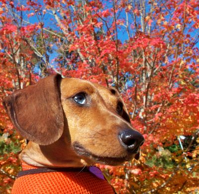 Hildy fall 2011