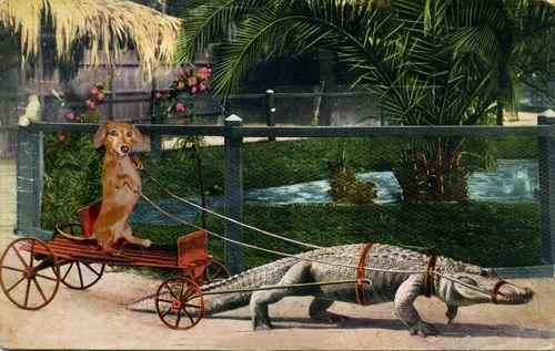 Hildy - Gator Wrangler