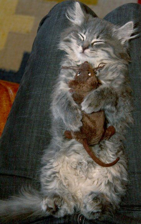 Mousey dreams