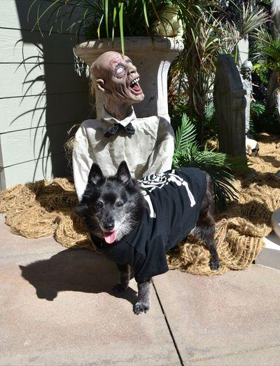 Lady 2012 - Halloween